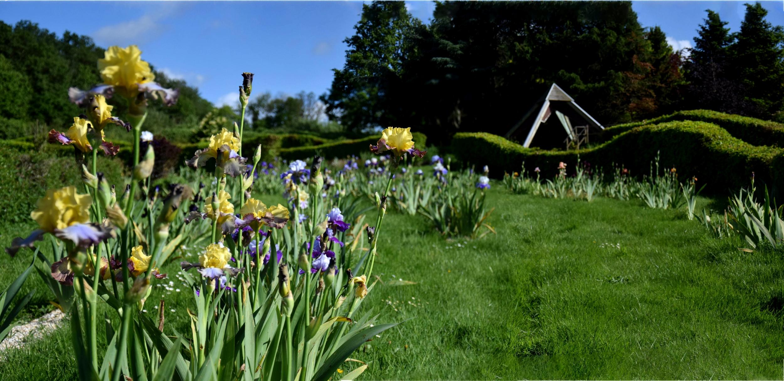 Collection d'iris jardins de Brocéliande